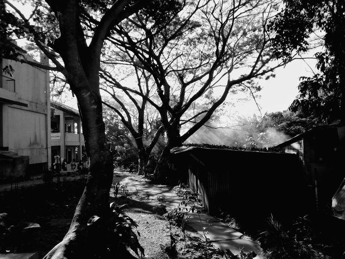 Tree Plant Nature Silhouette Sunlight Eyeem Philippines Mobilephotography