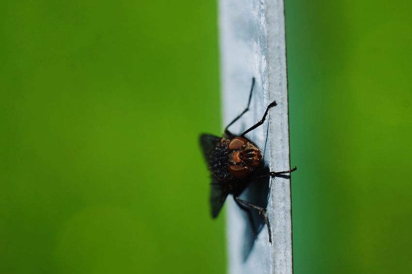 EyeEm Selects Insect Close-up Animal Themes Green Color