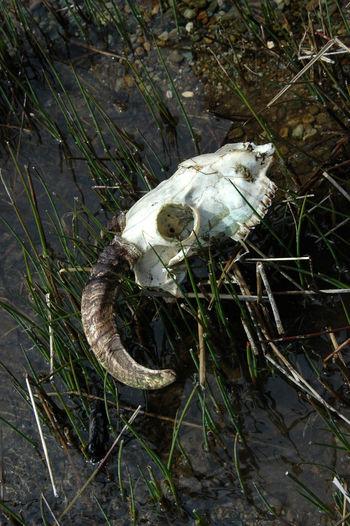 Skull Dead Animal
