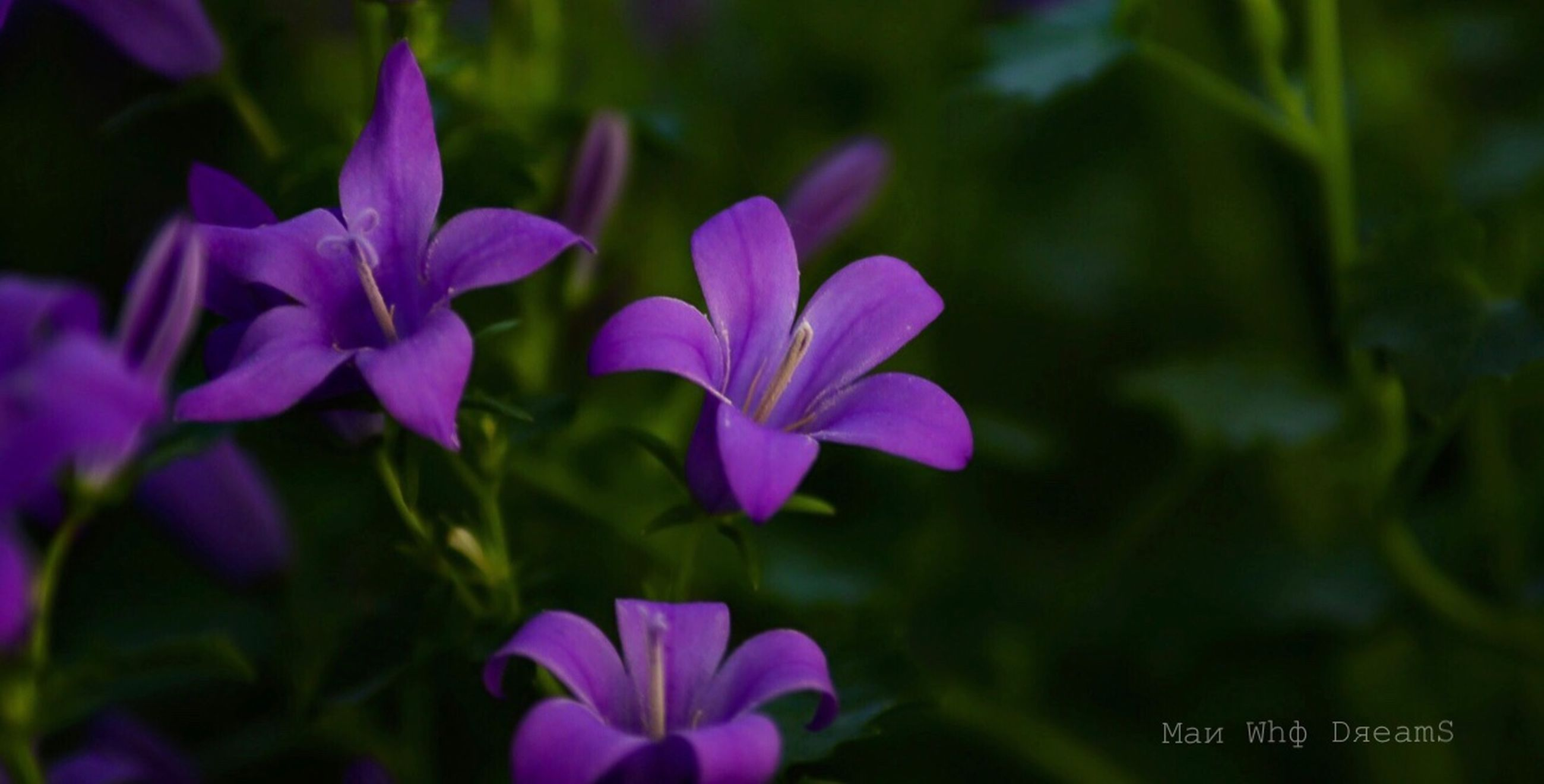 flower, flowering plant, plant, beauty in nature, fragility, vulnerability, freshness, petal, close-up, growth, purple, inflorescence, flower head, nature, no people, focus on foreground, day, selective focus, outdoors, plant part