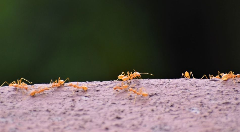 Close-up of ant on ground