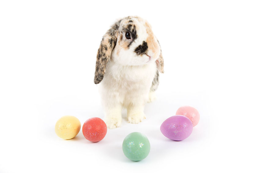 Image series with a rabbit and some with easter eggs. Easter Easter Bunny Easter Eggs Holiday Bunny  Easter Eggs. No People Rabbit White Background
