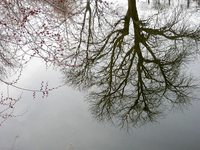 TakeoverContrast Tree Nature Water Berlin Reflection