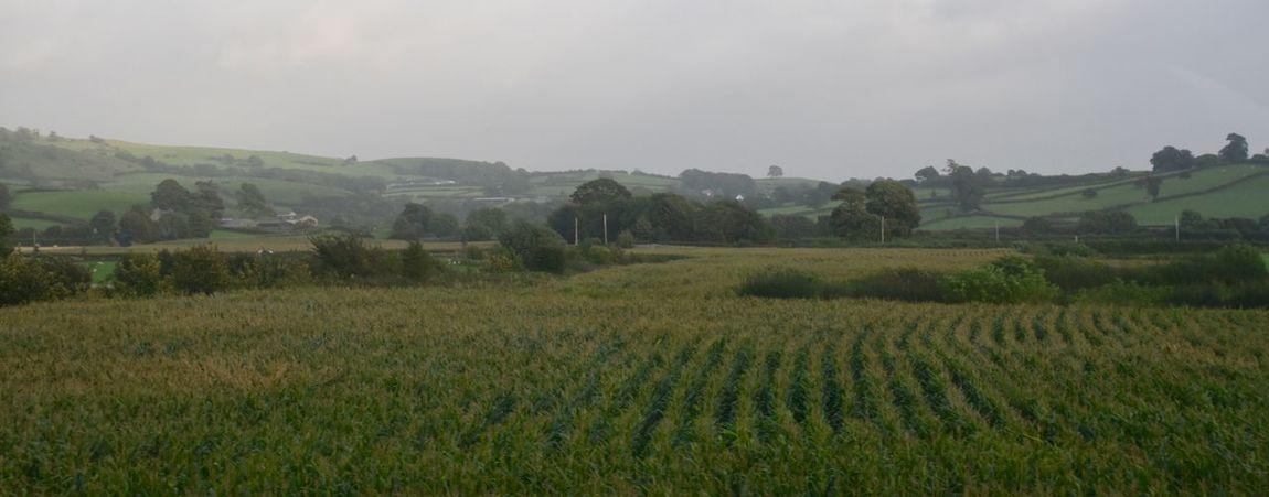 Taking Photos Landscape Motorway View Field Crop  Nikon D5500