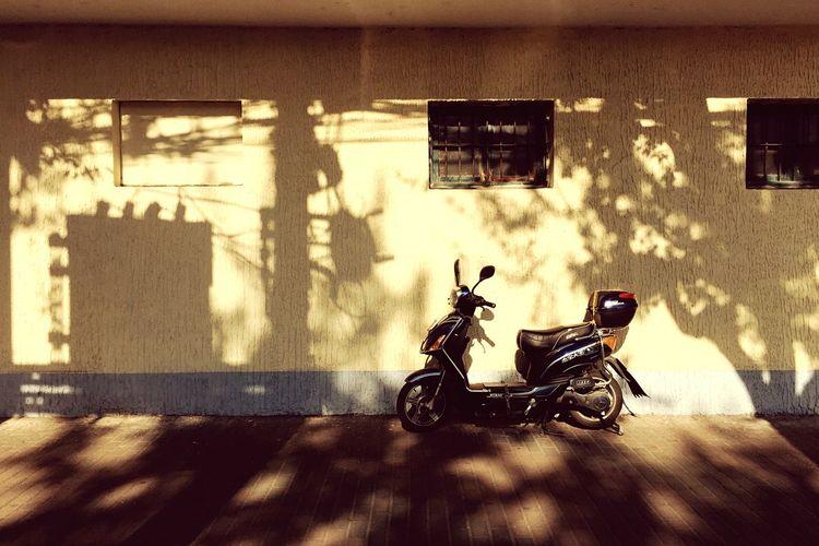 Life China Iphoneonly City Street Photography IPhone Photography IPhoneography 25 Days Of Summer Trees Arboretum