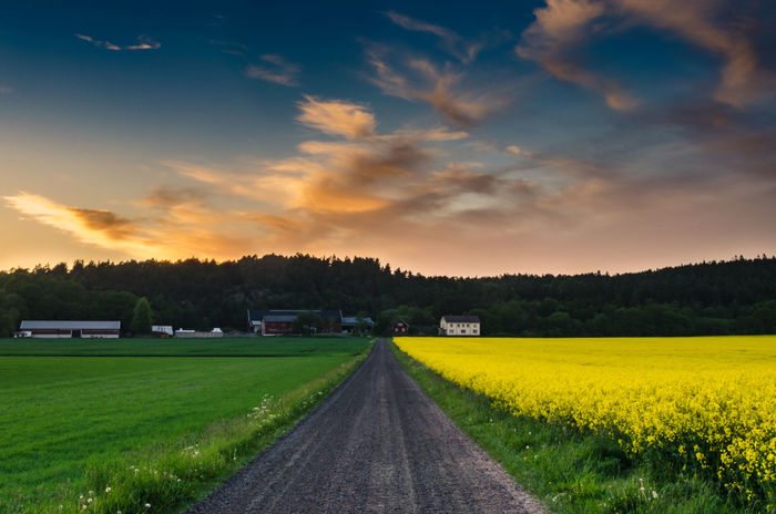 A thing of beauty is joy forever Cloudscape Farm Life Fjärås Goteborg Nikon Rapeseed Field Road Less Travelled Travel Beauty In Nature Dusk Gothenburg Hut Landscape Nature Rapeseed Scenics Sky Skyscape Sunset Sverige Sweet Food Tranquil Scene Tranquility Västra Götaland Yellow