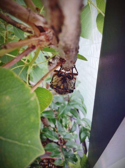 蝉 昆虫 夏 Cicada Insect Summer Nature Nature_collection