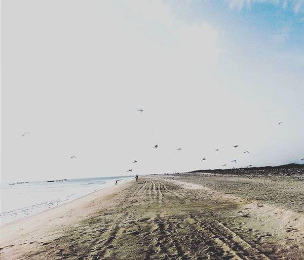 DHANUSH KODI BEACH 🌊🌊🌊🌊 Dhanushkodibeach Rameshwaram Beach Beachday Sand Birds Bliss Beautiful Bluewater Bluesky India South Southindia _soi Instatravel Travel Tamilnadu Travel Traveljournal Pixelpanda_india Incredibleindia Picturesofindia Indiapictures Beautifulindia Hippieinhills indiatravelgram desi_diaries india