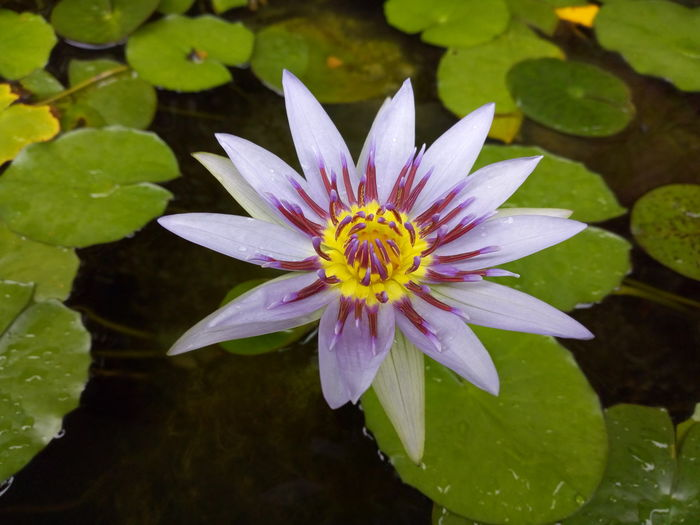 nature Violet Flowers Mobilephotography Naturephotography #beautiful