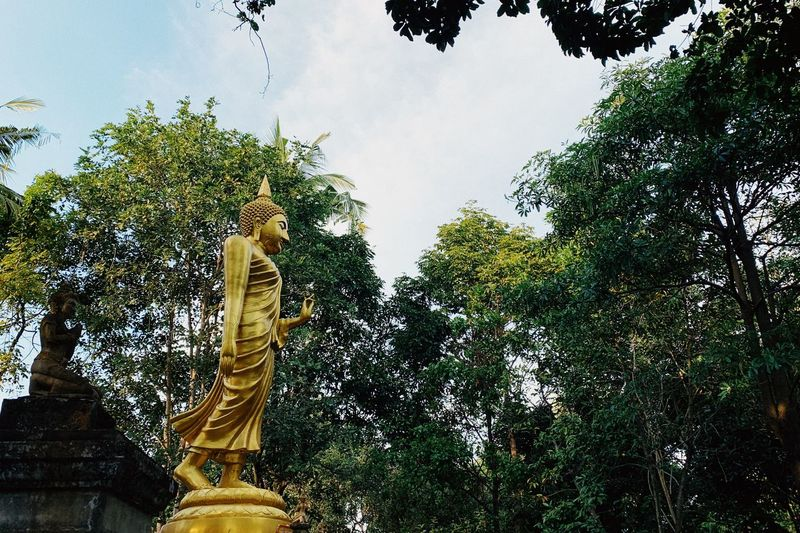 PhonePhotography Trees Buddhism Temple Chiangmai Thailand Buddha Tree Plant Low Angle View Sky No People Nature