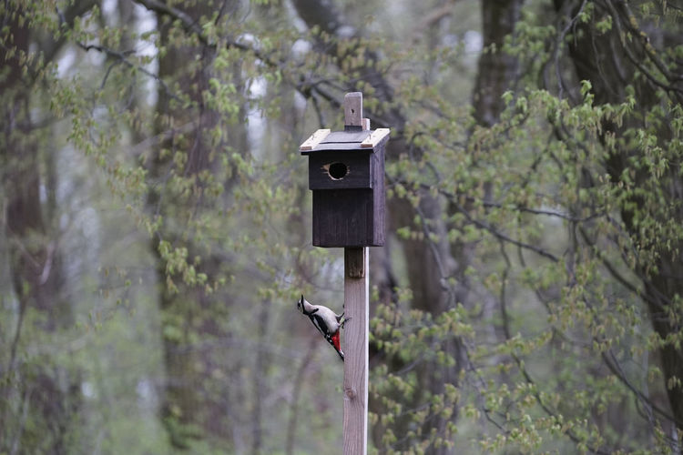 Animal life Animal Animal Themes Beak Beautiful Bird Birdhouse Box Day Focus On Foreground Forest Green Color Lesser Lush Foliage Nature Nest Nesting Box No People Outdoors Selective Focus Spotted Tranquil Scene Tree Watchful Woodpecker