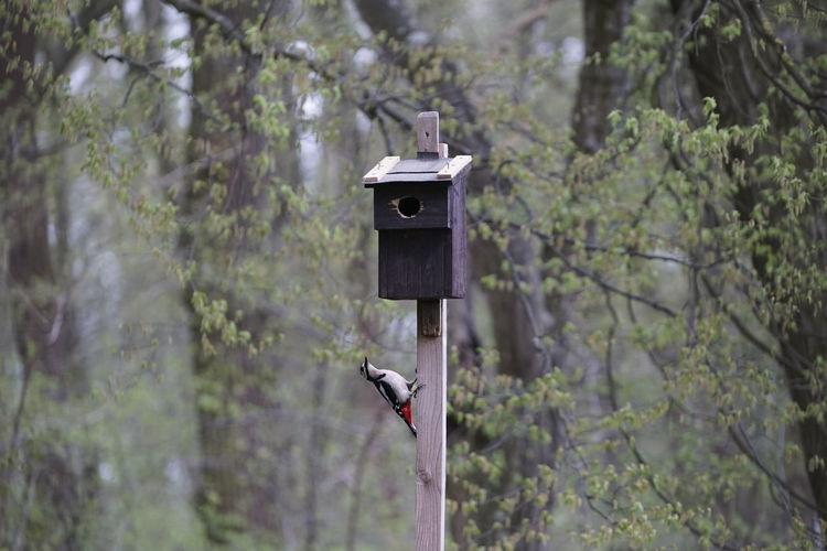 Woodpecker on birdhouse