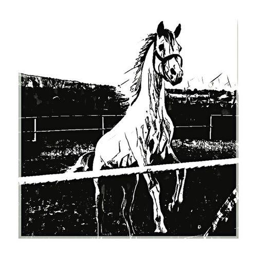 Horsesofinstagram Outdoors Animal Themes No People Fresh On Eyeem  Horsestagram Happy Time Horsesdraw Serigrafia Serigraphy Serigraphie Serigraph Mammal Desingerduyguomuzlu Design Desinggraphic Desinged By Me Desingtime Horsesdraw