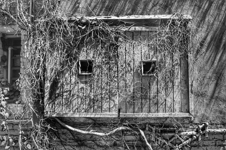 Day Full Frame No People Outdoors Architecture Close-up Window Windowframe Woodenwindow Black And White Photography EyeEmNewHere TheWeekOnEyeEM Black & White Shades Alleys Riverside Branches