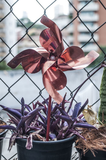Pinwheel toy in potted plant against chainlink fence