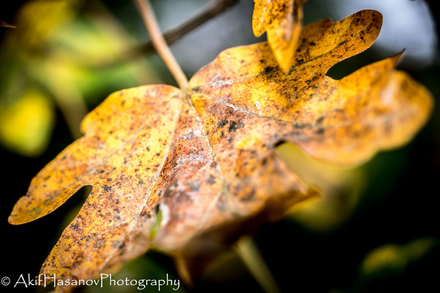 Autumn Beauty In Nature Change Close-up Dry Focus On Foreground Leaf Nature No People Outdoors