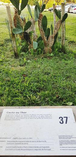 Cactoc or Thor Plant Thor  Cacto Growing Communication Text High Angle View Grass Close-up Young Plant Plant Life Cactus