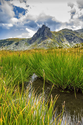 beauty day landscape on the mountain with grass, water and hill Natural Raw Beauty In Nature Bulgaria Cloud - Sky Day Environment Grass Hill Lake Landscape Mountain Mountain Range Nature No People Non-urban Scene Outdoors Plant Rila Scenics - Nature Sky Tranquil Scene Tranquility Vertical Water