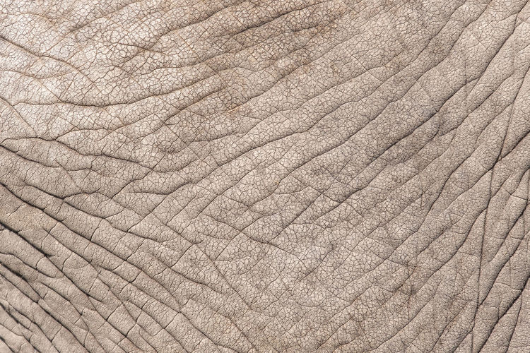 Backgrounds Full Frame Textured  Pattern No People Animal Skin Close-up Wrinkled Animal One Animal Animal Themes Day Textile Mammal Nature Animal Body Part Abstract Leather Vertebrate Rough Textured Effect Elephant African Elephant Animals In Captivity Frowning Endangered Species Animal Markings