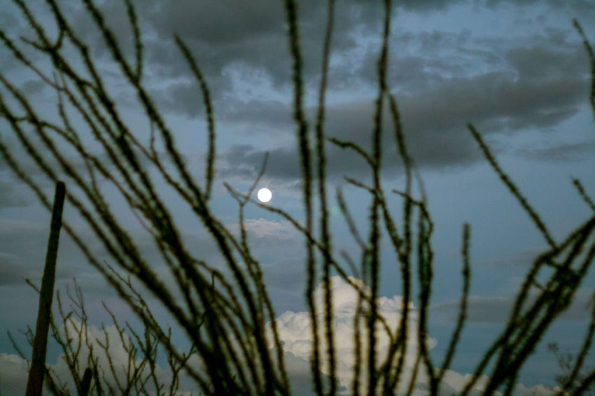 Ironwood Forest National Monument Beauty In Nature Blade Of Grass Close-up Cloud - Sky Day Focus On Foreground Growth Lake Moon Nature No People Outdoors Plant Reflection Scenics - Nature Selective Focus Sky Tranquil Scene Tranquility Water