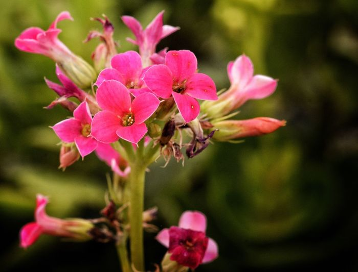 Flowers of the day Flower Pink Color Fragility Petal Nature Growth Beauty In Nature Freshness Close-up Focus On Foreground Blooming Flower Head No People Plant Outdoors Day Rhododendron