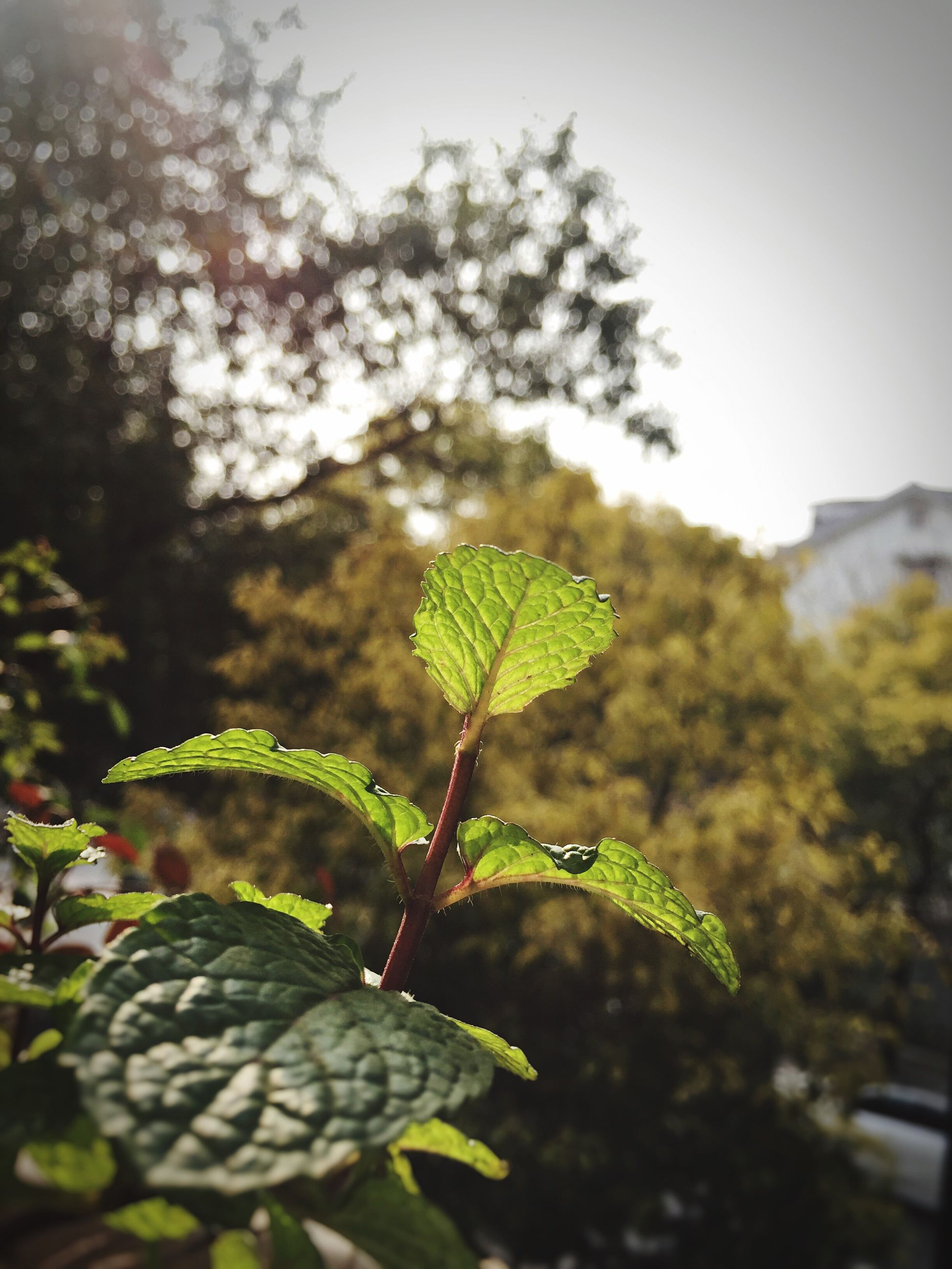 leaf, focus on foreground, green color, animals in the wild, animal themes, close-up, one animal, plant, wildlife, growth, nature, selective focus, insect, beauty in nature, day, outdoors, no people, sunlight, tree, green