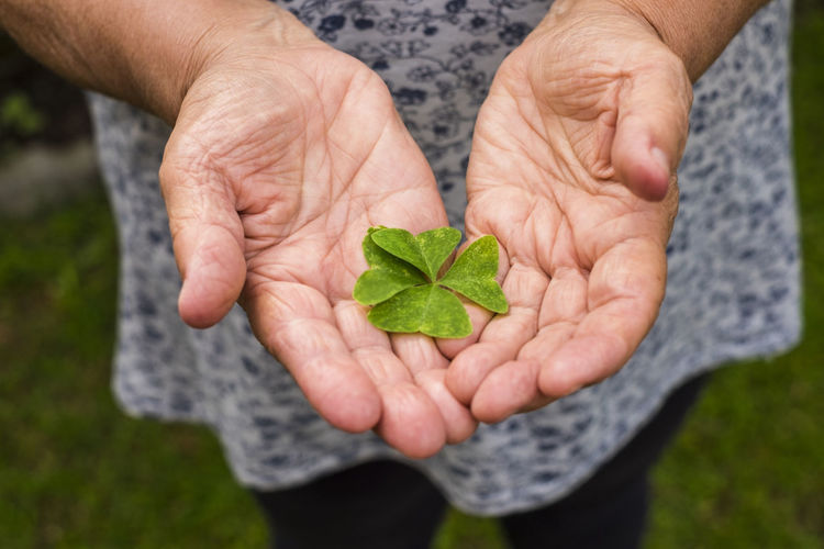 Midsection of woman holding clover leaves
