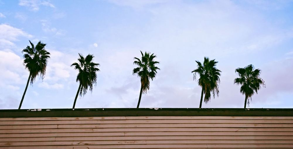Hanging Out How's The Weather Today? Fresh 3 Tree_collection  Palm Trees The Artsy Lens Everything In Its Place The Essence Of Summer The Great Outdoors - 2016 EyeEm Awards Home Is Where The Art Is