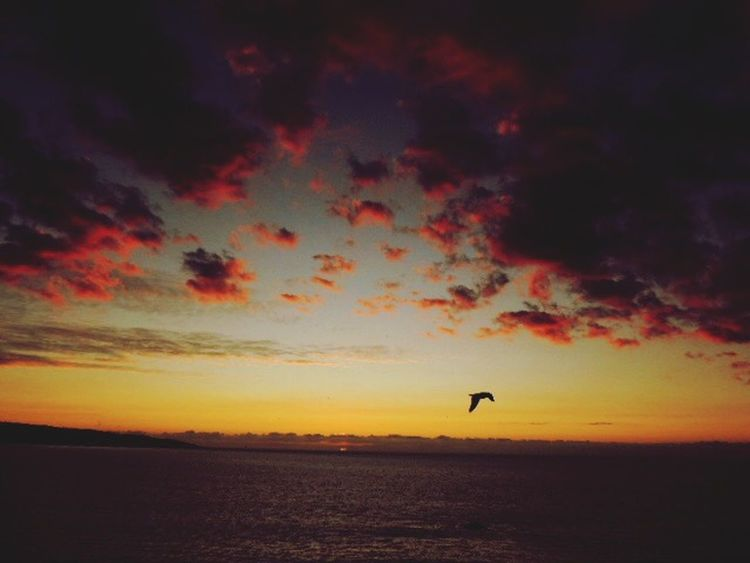 After The Sunset Afternoon Sky Dramatic Sky Bird In Flight Cloudsporn Sea And Clouds Eyem Nature Lovers  Dark Clouds Red Clouds I Love My City This Is My City Showcase: November Magic Sky EyeEm Nature Lover My Best Sunsets 2015 My Favorites Sunsets