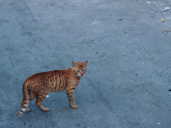 Meow ? Pets Check This Out Vscocam Shootermag Cat 50mm VSCO RePicture Leadership Canon EyeEm Best Shots