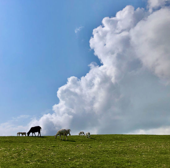 Horses grazing in field against sky
