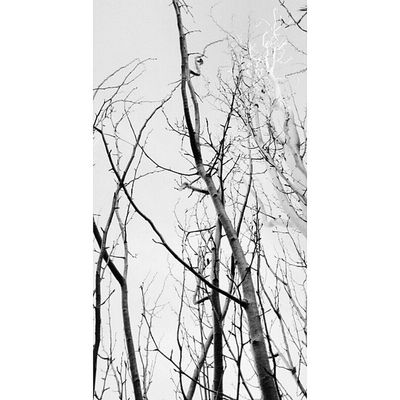 Nature_perfection Natureonly Nature_obsession Blancoynegro blackandwhite worl_captures wu_spain wonderfulworld bnwphoto bnw_universe instaabenza instaart lightsandshadows movilgrafias bnw fototag_igrsa_minimal minimalmood minimal_shot minimalismo clubepixel clikat blancoynegro whiteandblack