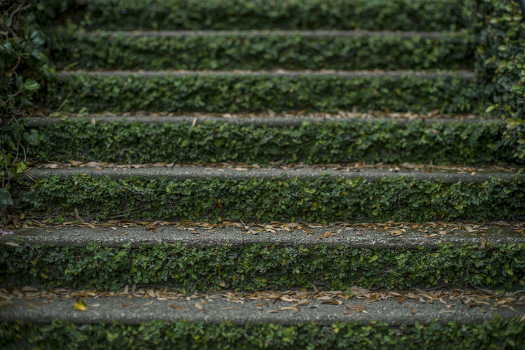 Green Color Ivy Leaves Stairs Stairway Background Ivy Ivy Covered Outdoor Photography Outdoors Outdoors Photograpghy  Stair Staircase Texture