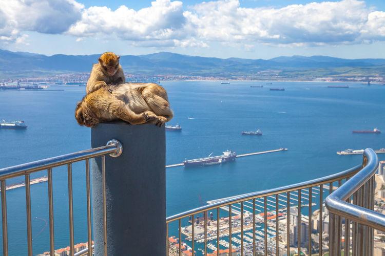 Two monkeys on a pole
