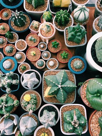 Full frame shot of various succulent potted plants for sale at market