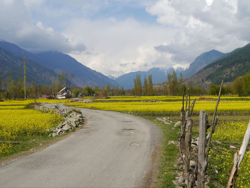 Agriculture Beauty In Nature Field Kashmir Kashmirdiaries Landscape Mountain Mustard Fields Nature Rural Scene Scenics Sky Tranquil Scene Tranquility Yellow Yellow Mustard