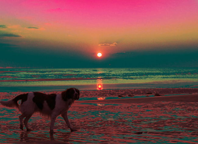 Beach Dog Dog On Beach Dog On The Beach Escapism Getting Away From It All Horizon Over Water Outdoors Relaxation Sand Scenics Sea Shore Silhouette Sky Sun Sunset Tranquil Scene Vacations