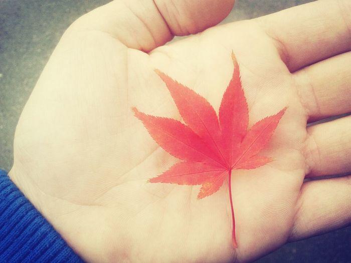 Walking Around Autumn Colors