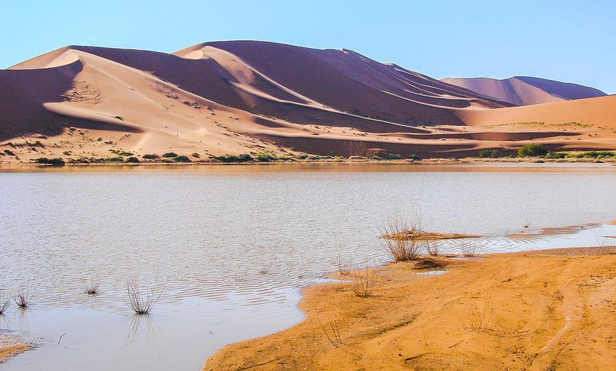 Tranquil Scene Namibia Namib Desert Arid Landscape Dry Namib Dunes Arid Climate Remote Desert Tree Beauty In Nature Tranquility Sand Landscape Sand Dune Nature Scenics