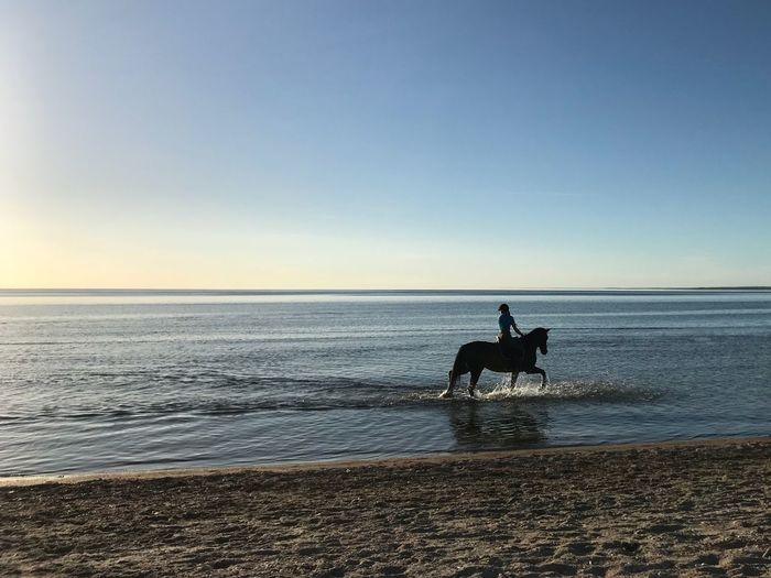 Water Sky Sea Beach Horizon Over Water Horizon Land Horseback Riding Riding Ride Horse Outdoors Nature Beauty In Nature