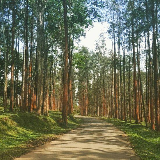 Bandipur Morning Sunshine Wayanad InfinityAndBeyond Incredibleindia