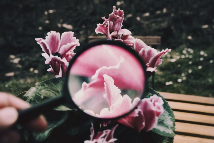 Magnifying Glass Magnifier Flower Head Flower Pink Color Springtime Petal Peony  Close-up Plant In Bloom Plant Life Blooming Blossom