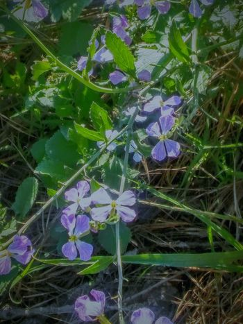 Flowers,Plants & Garden Vine Leaves Flowers And Weeds Flower Photography Nature Photography Purple Flowers Green Leaves Green Vine Showcase April