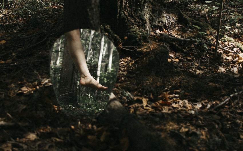 Low section of person reflecting on mirror in forest