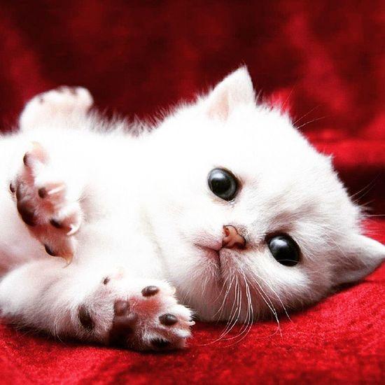 Thts wht we call cute Cute Cat😻