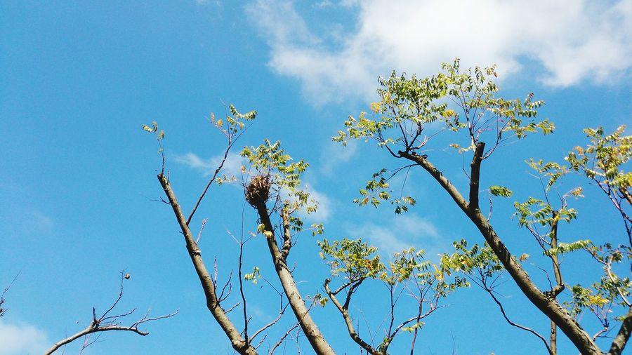 Bird Tree Branch Blue Flower Sky Close-up Plant Animal Themes Leaf Vein Plant Life Leaves
