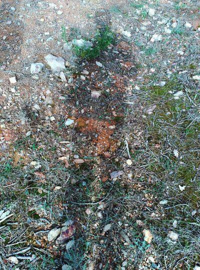 Sombres Nature Sutil Natural Condition Natura Mountain Montañas❤ Caminant  Tranquility Sombres Shadow Shadows & Lights