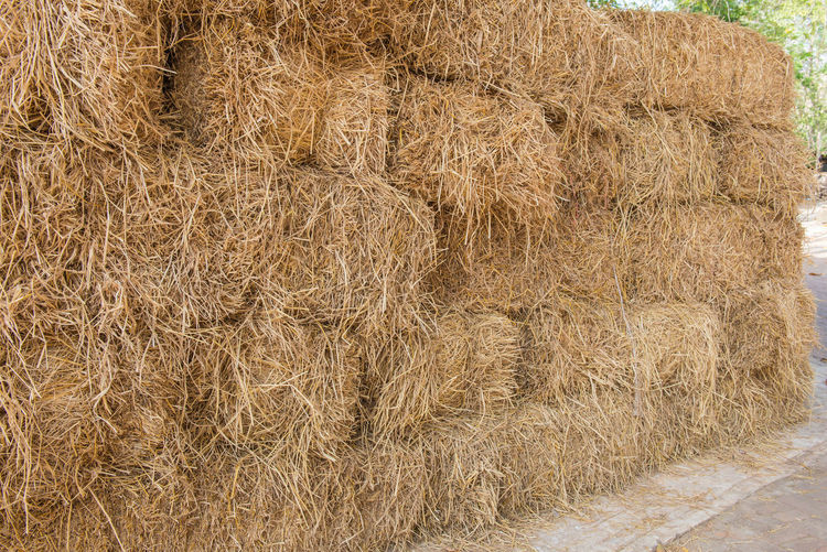 Hay Bale  Haystack Plant Agriculture Farm Straw Field No People Nature Rural Scene Dry Land Day Landscape Brown Crop  Harvesting Stack Close-up Outdoors