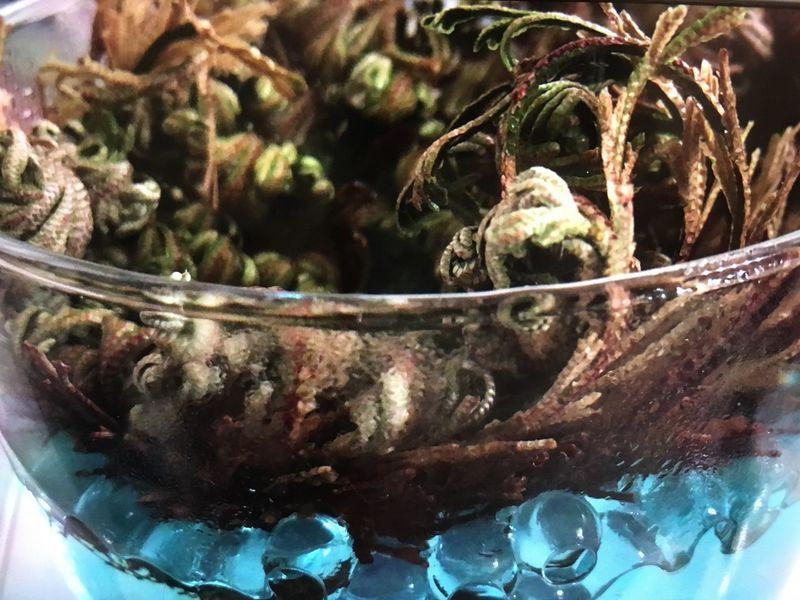Wüstenrose von Jericho Wüstenrose Indoors  Close-up No People Freshness EyeEmNewHere