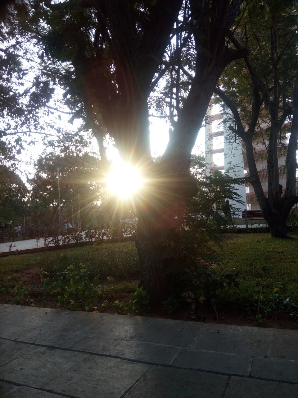 tree, sunbeam, sun, sunlight, lens flare, nature, growth, outdoors, tranquility, no people, beauty in nature, scenics, grass, day, branch, sunset, sky